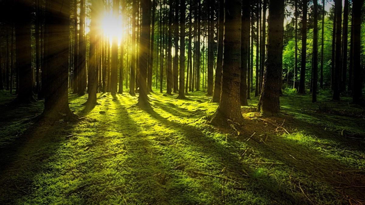 Forest-CONSERVATION