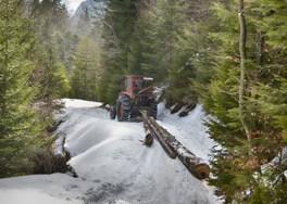 world wide carbon - improved forest management